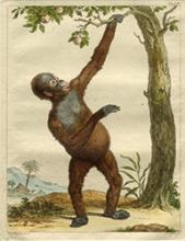 Darstellung eines Orang Utans vor einem Baum